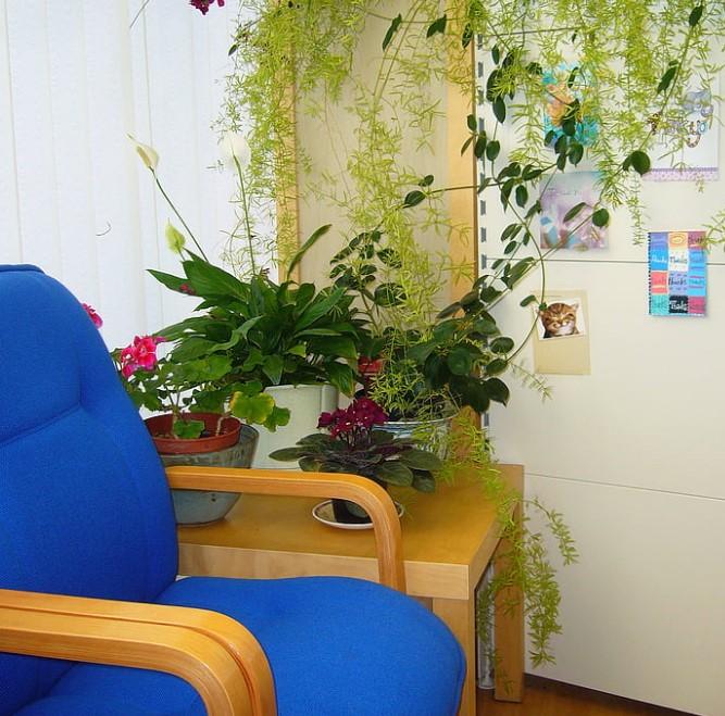 Plante d'intérieur pour la maison
